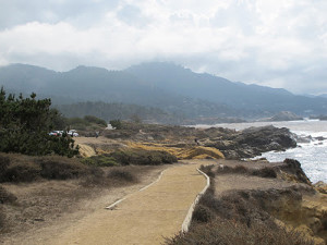 The mysterious wilds of Point Lobos State Reserve
