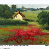 English Poppies at Cheriton - a