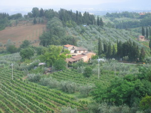 "Photo reference for ""Italian Vineyard"""