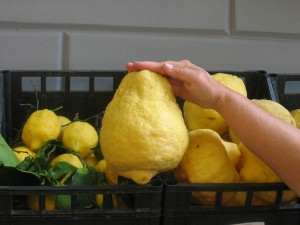 Now there's a lemon! Discovered in a Sorrento market.