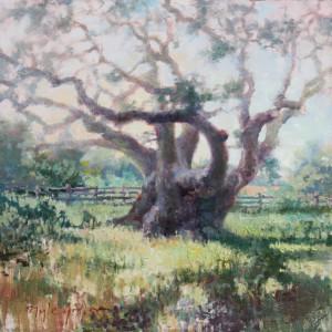 """""""The Big Tree"""" - 20"""" x 20"""" - Oil"""